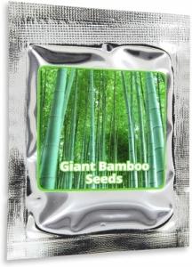 Windschutz mit Bambuspflanzen