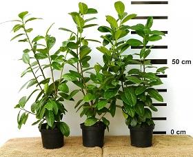 Windschutz Pflanzen – Ideen für Garten & Terrasse