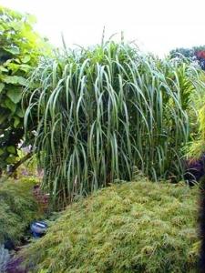 Schilf und Gräser schützen vor Wind